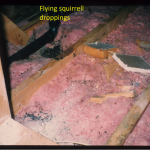 Wildlife removal Durham region