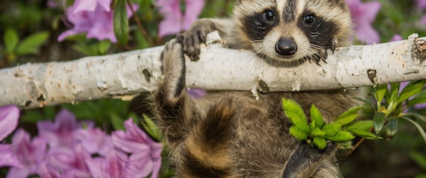 How To Make Your Yard More Wildlife Friendly