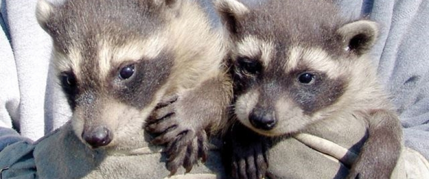 Humane ways to avoid conflict with wildlife in Durham