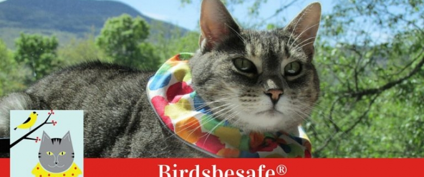 How-to: Prevent Cat Attacks on Wildlife