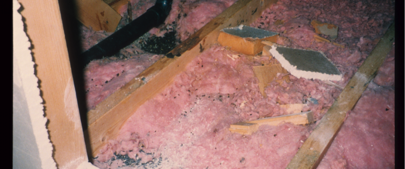 How To Safely Remove Wildlife Waste From Your Property's Attic